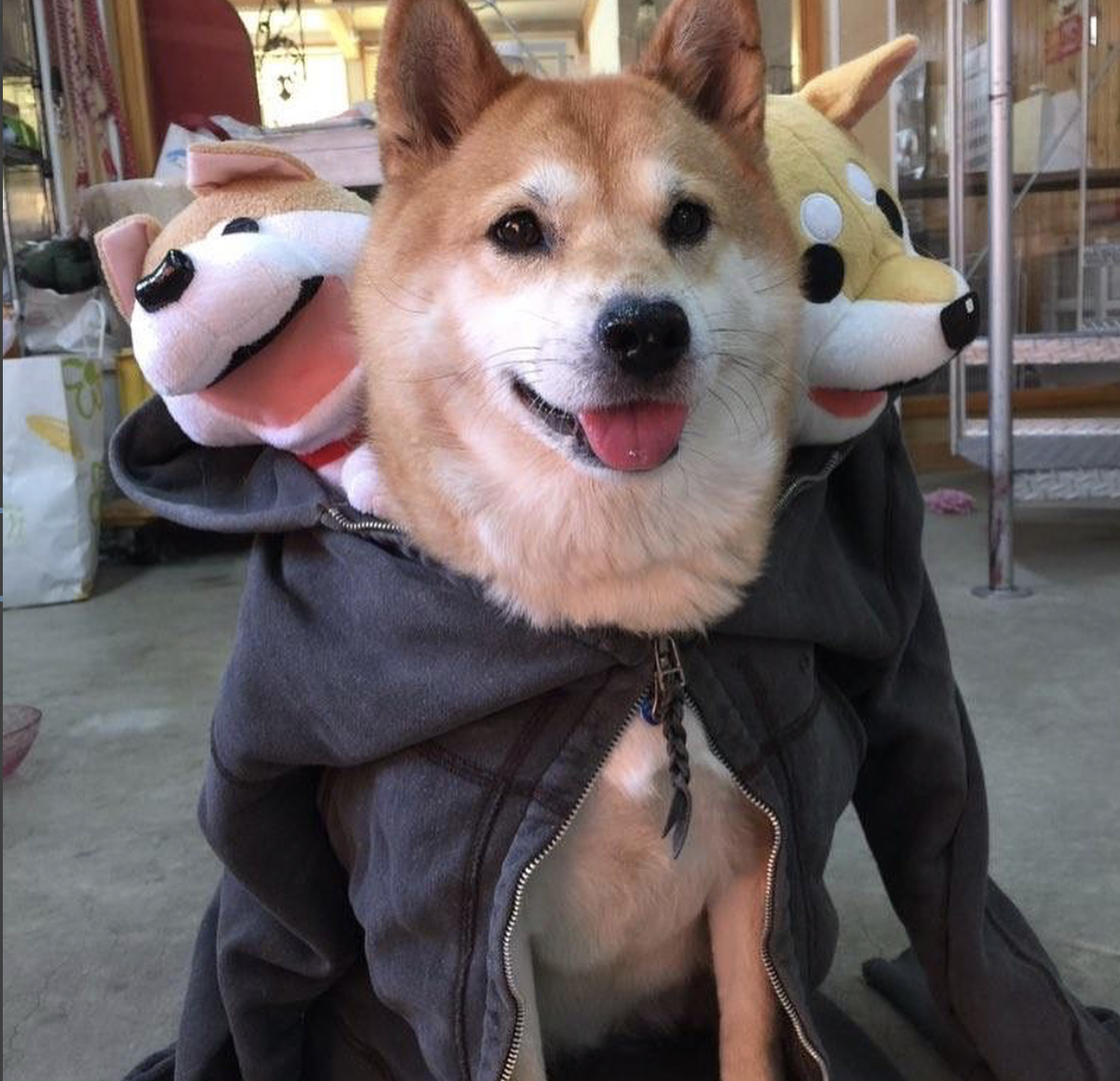 corgi fluffy halloween dog costume