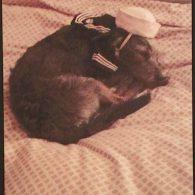 Kristen Wiig's pet Moose
