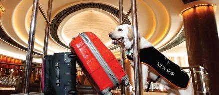 Good boy Labrador failed guide dog school, hired as hotel concierge instead