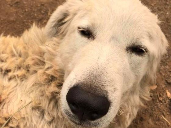 Odin hero dog
