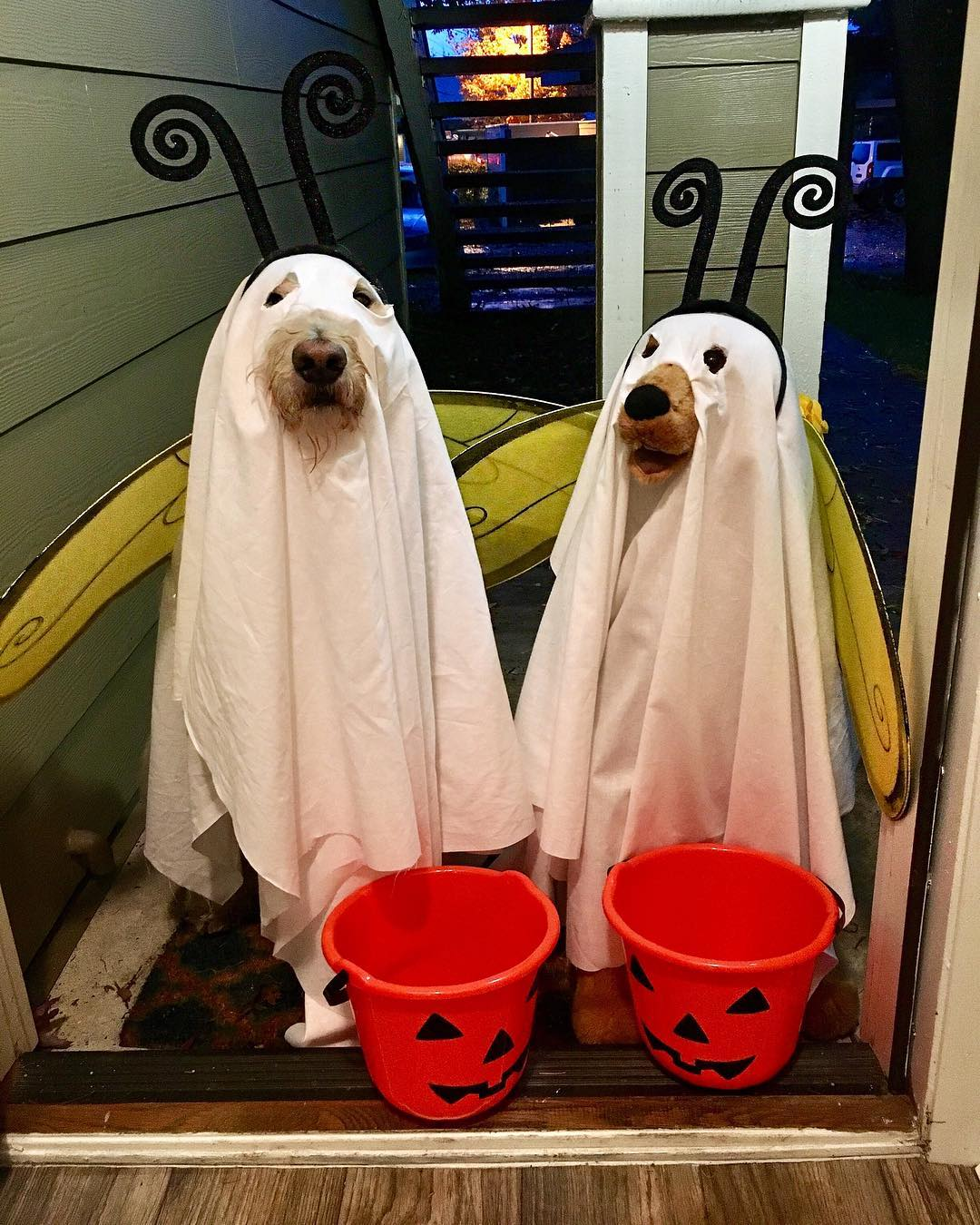 Boo Bees halloween dog costume