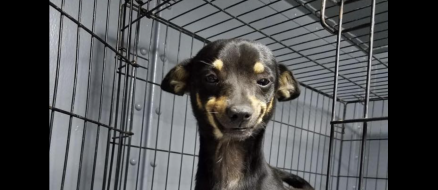 Rescue dog wins at adoption with million dollar smile