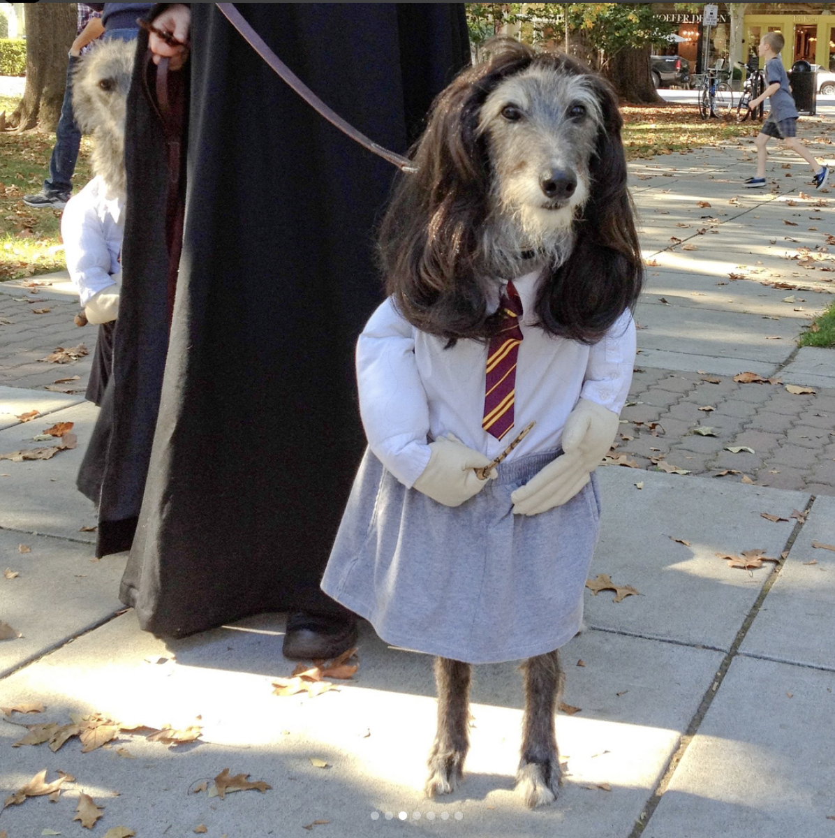 Harry Potter halloween dog costume