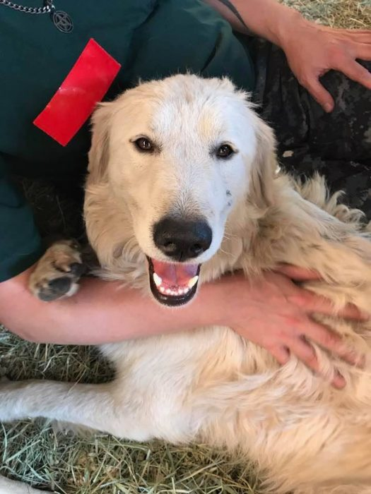 odin hero dog wildfires