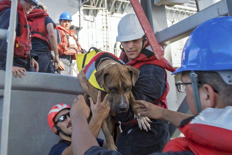 Tasha fuiaba rescue