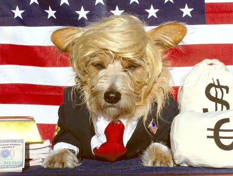 trump Halloween dog costume