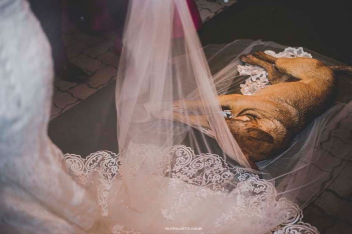 wedding dog crash Sao Paulo