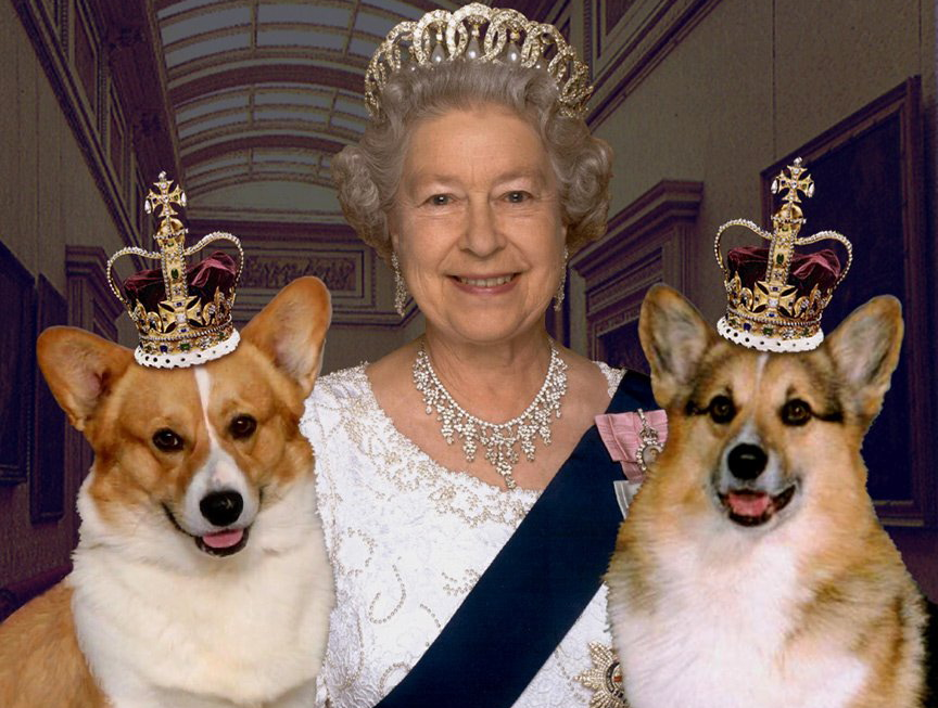 The Queen corgi
