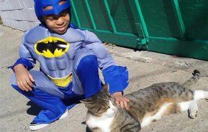 catman superhero cats