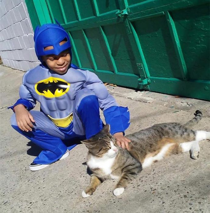 catman superhero cats