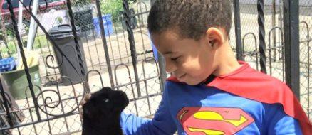 """Superhero """"Catman"""" saves stray cat lives daily"""