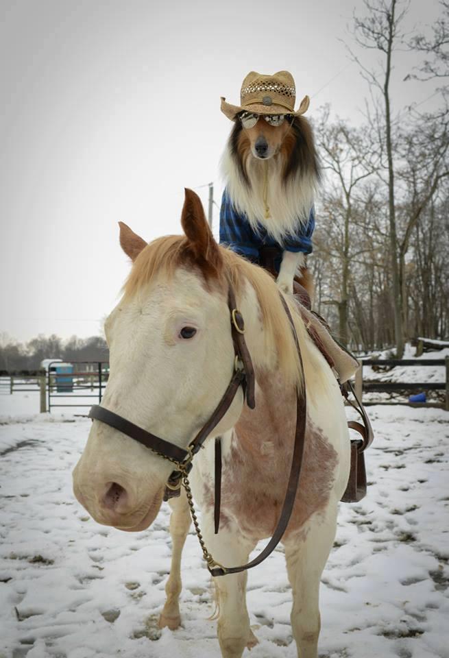 cowboy dog horse