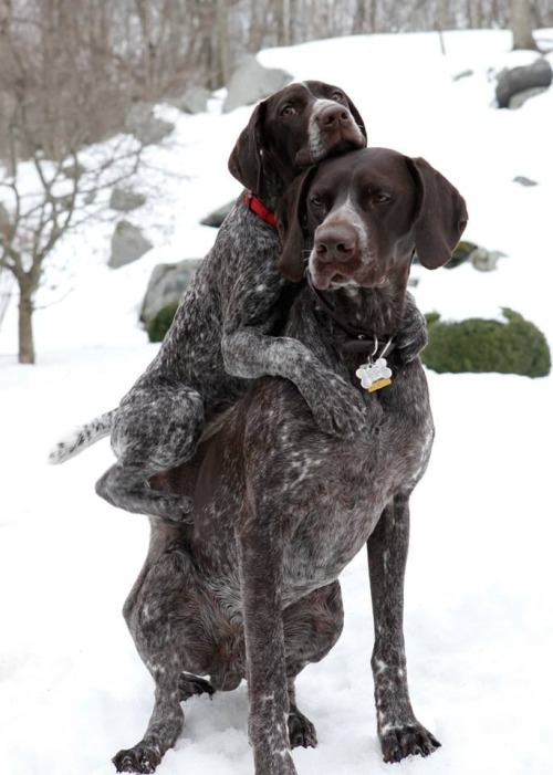 dog riding dog