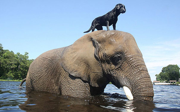 elephant dog ride