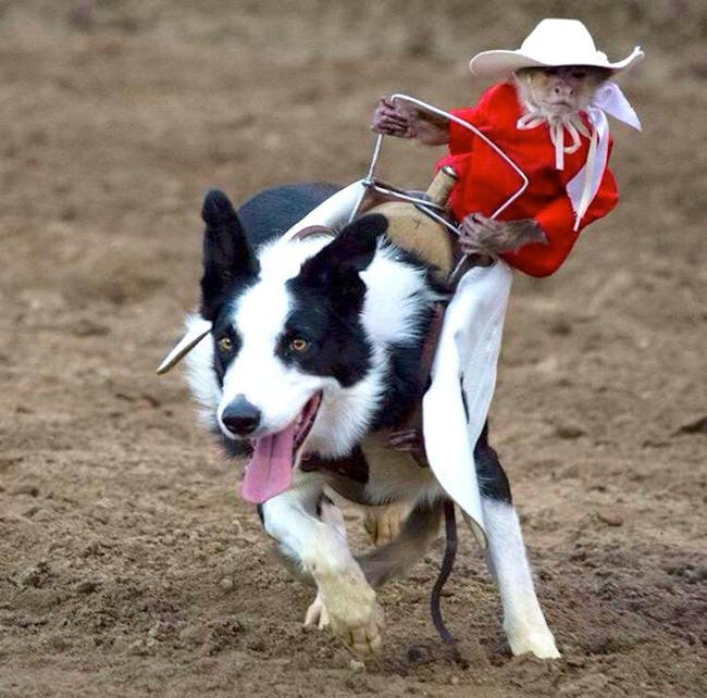 monkey cowboy dog
