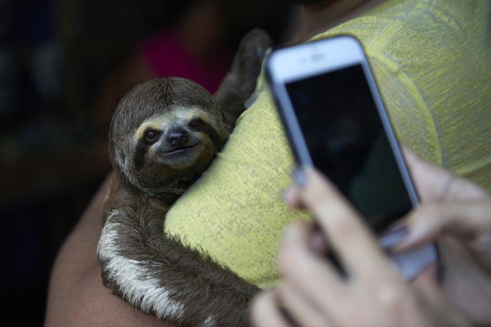 sloth selfie harmful