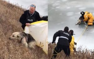 swift current dog rescue