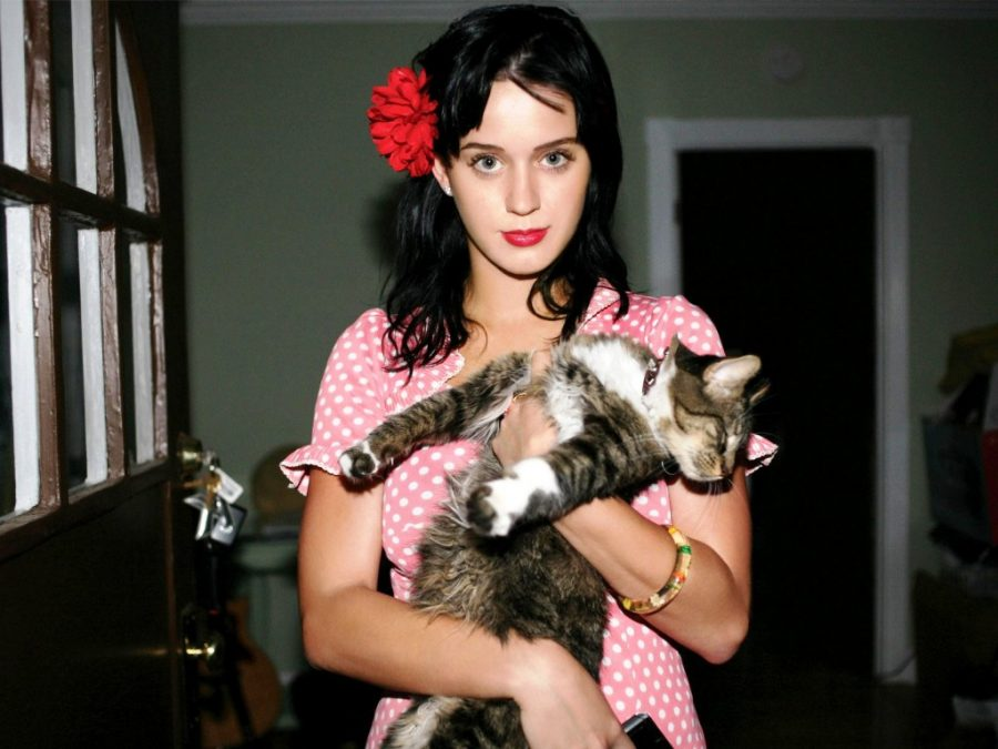 kitty purry katy perry