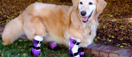 Chi Chi the Therapy Dog Has 4 Prosthetic Limbs & Can't Stop Smiling
