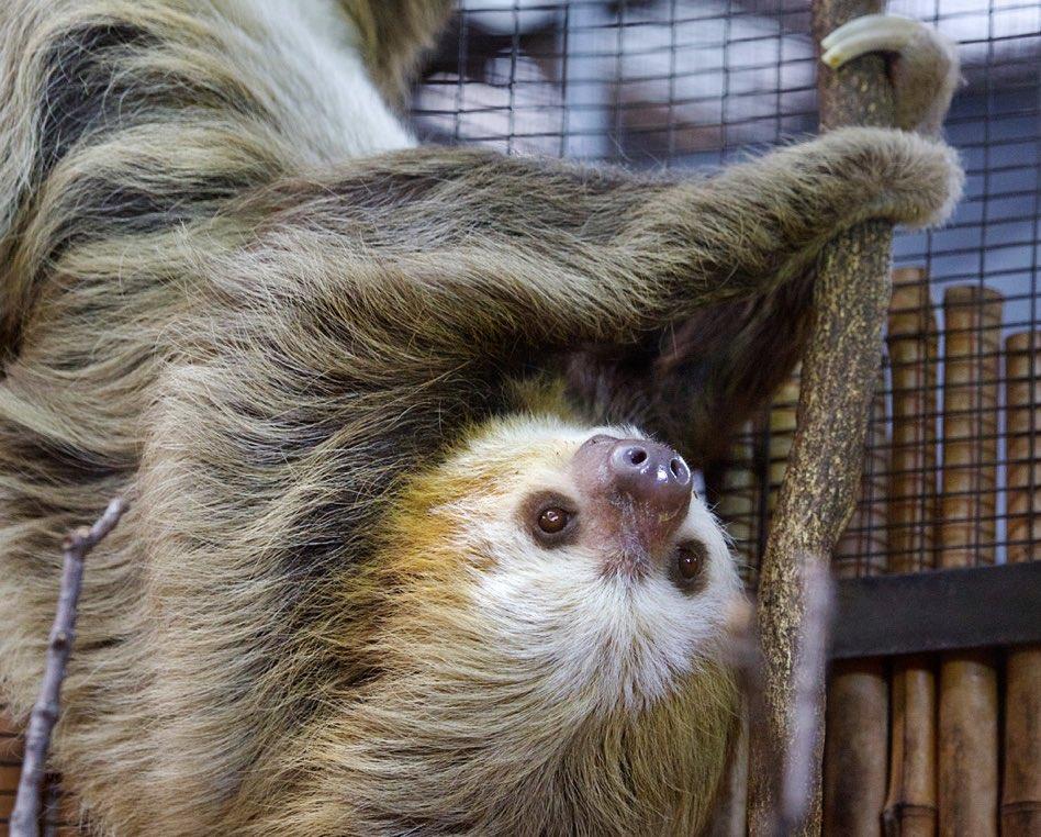 sloths valentines day