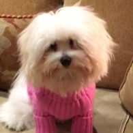 Barbra Streisand's pet Miss Fanny