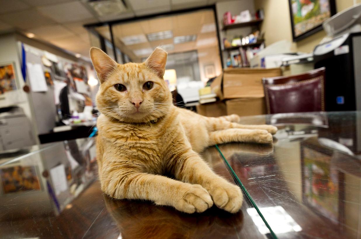 Hamlet cat Algonquin hotel
