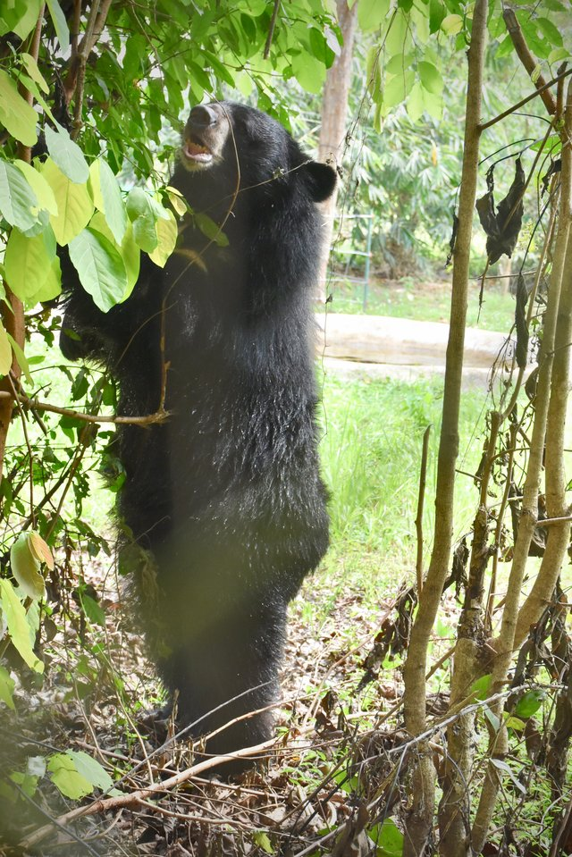 rescue bear joy