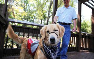 Rosco seizure dog