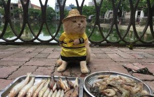 cat fishmonger dog