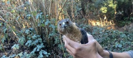 Well, This is Hawkward: Mom Catches Bird of Prey in Bare Hands