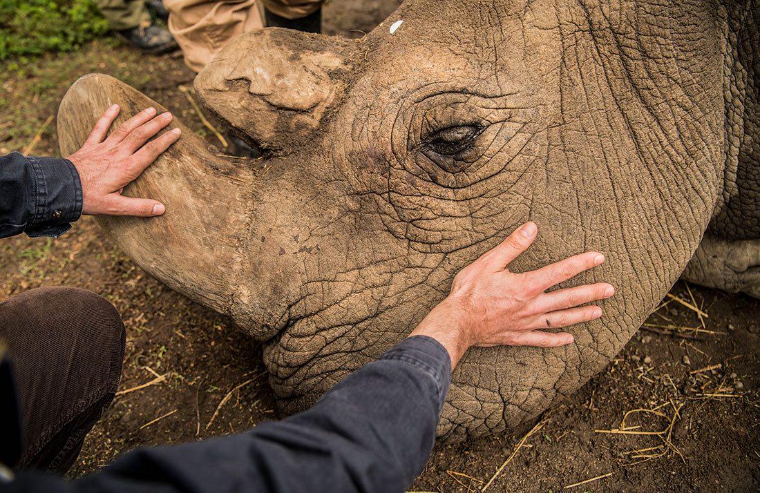 rhino kenya endangered