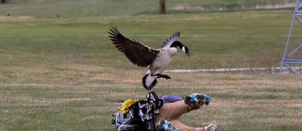 Goose Hates Golf, Attacks Local Teen in Rage