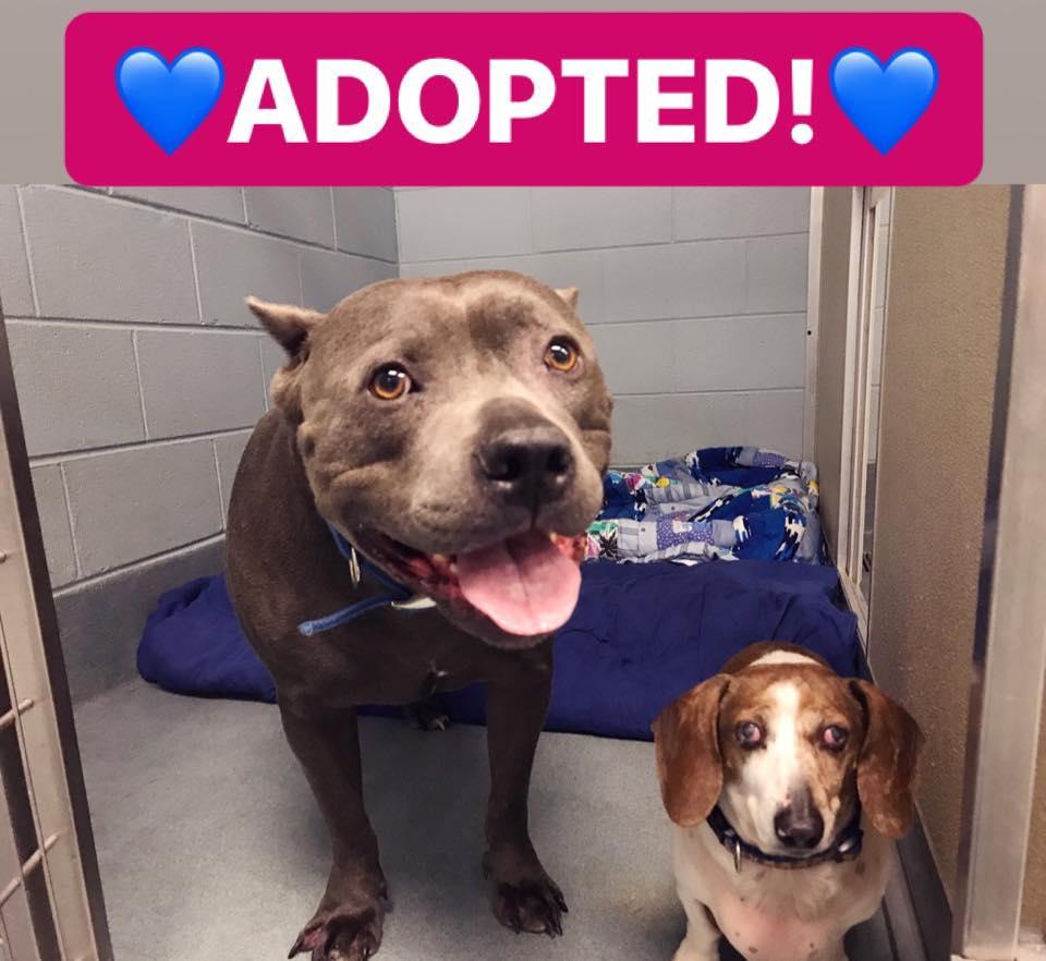 adopted blue dozer oj