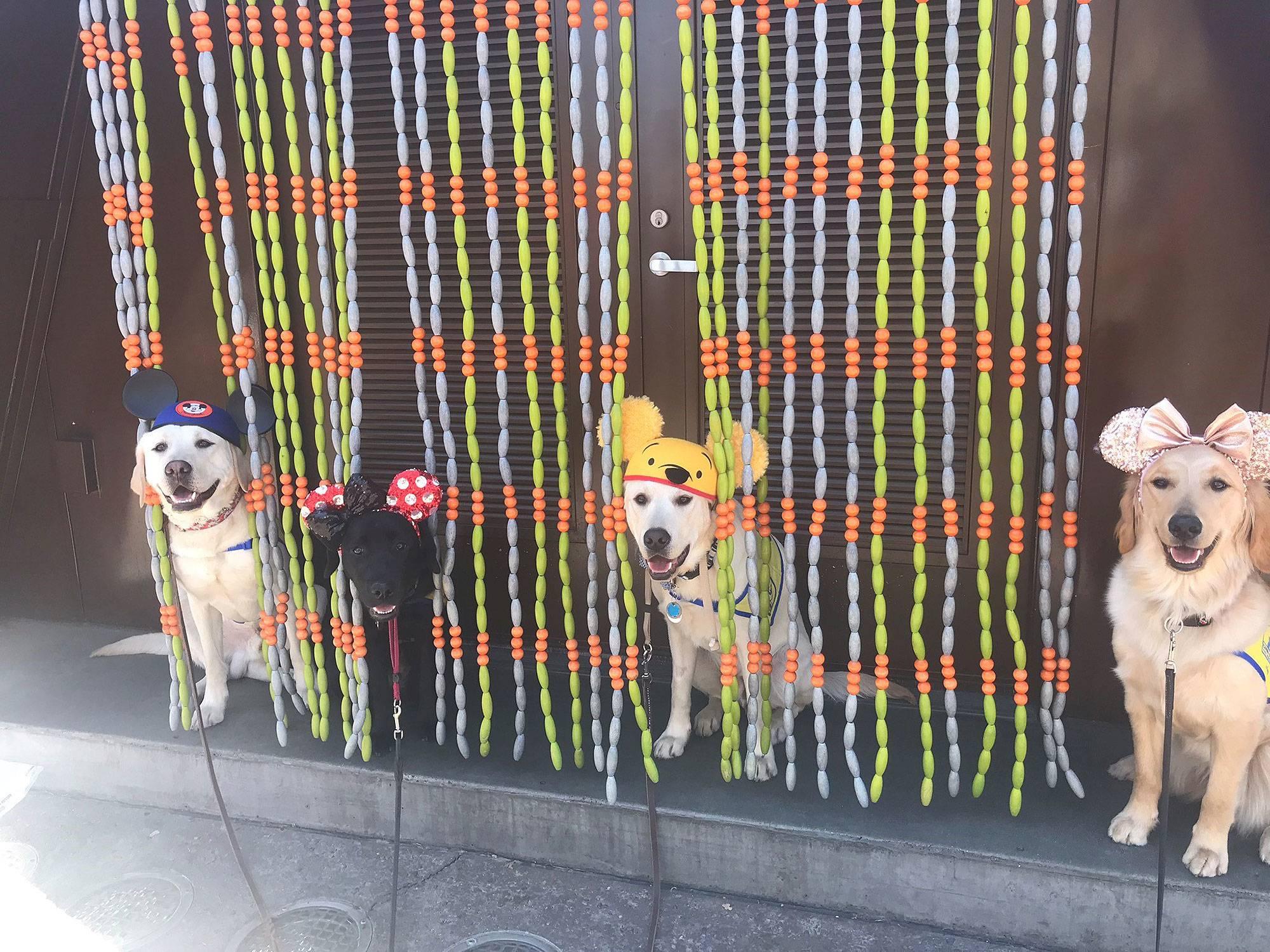 service dogs Disneyland