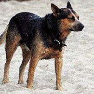Owen Wilson's pet Garcia