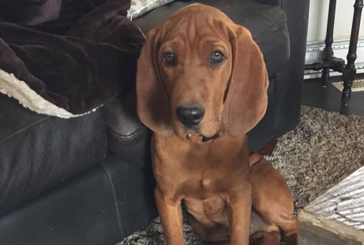 red stolen dog
