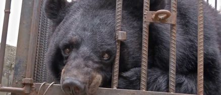Family Thinks They're Raising a Pet Dog, Turns Out To Be a Black Bear