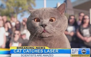 Cat Catches Laser - Aaron's Animals Viral Cat Videos