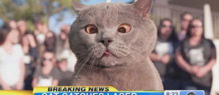 """""""The cat who finally caught the laser"""" and more hilarious cat videos from Aaron's Animals"""