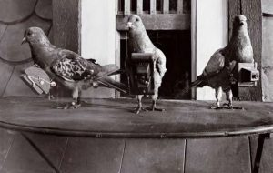 homing pigeons drone aerial photographs