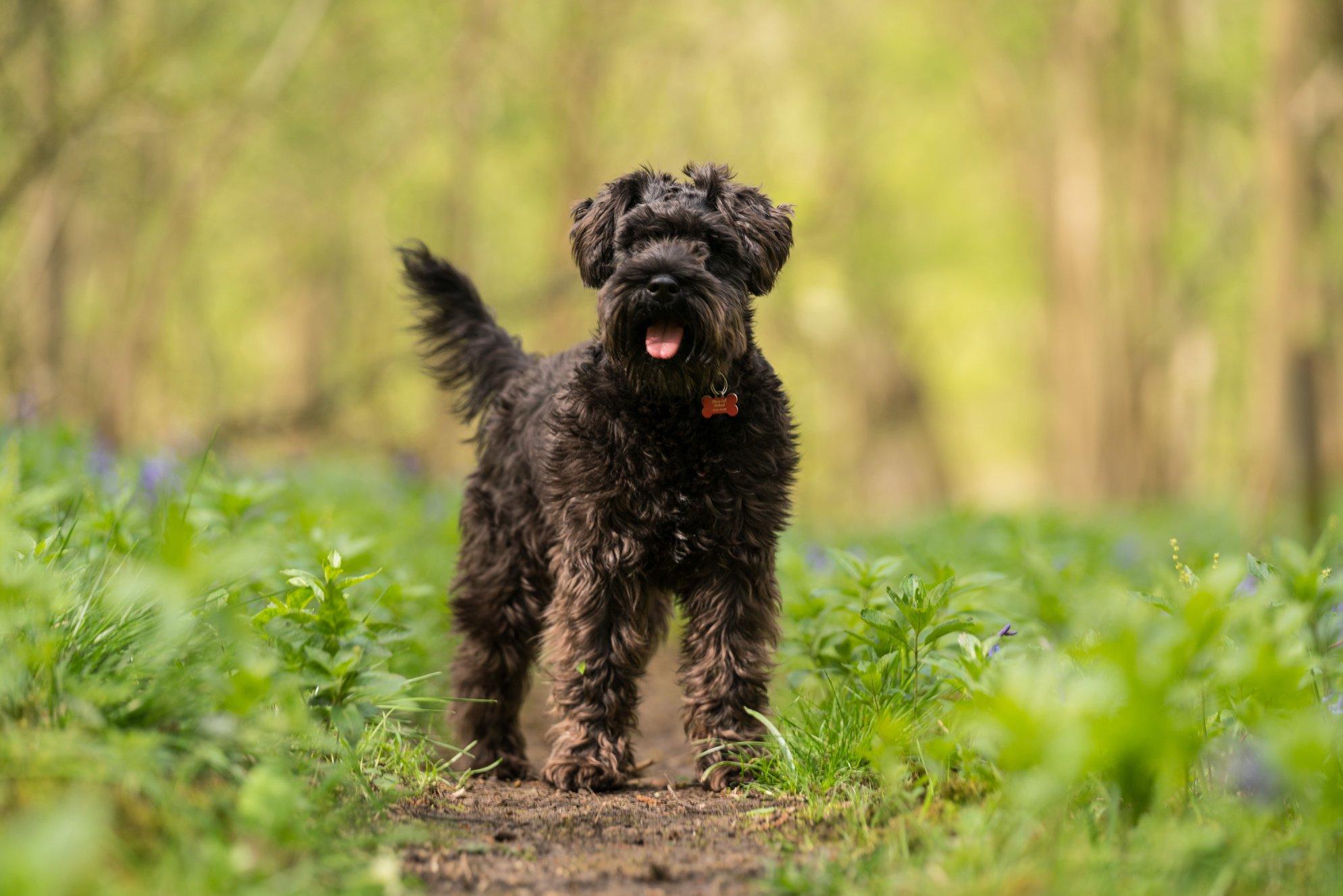 wilma stolen amazon dog