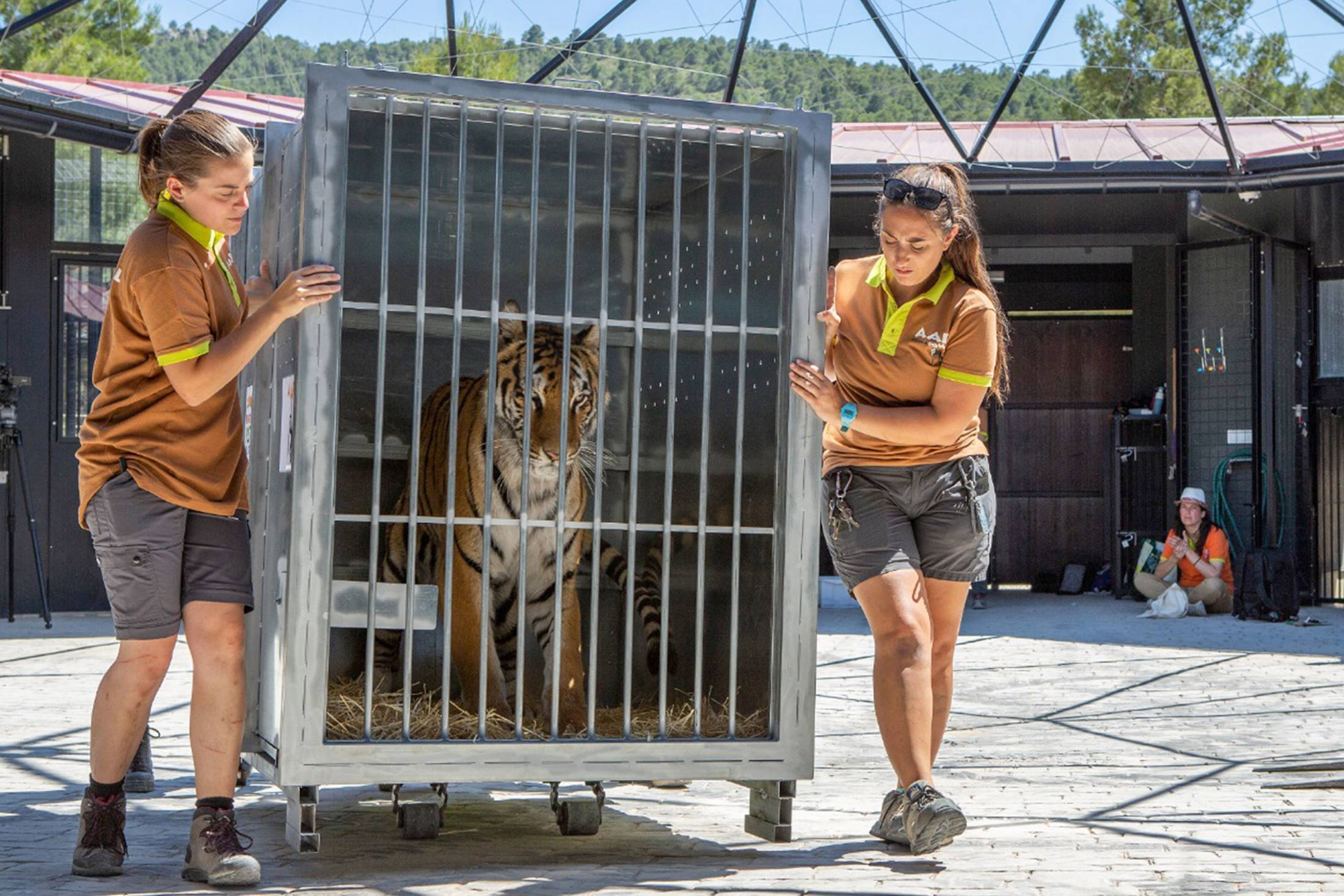 AAP Tigers rescue circus