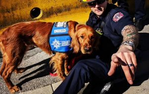 Lola trauma dog - Vancouver Fire Department
