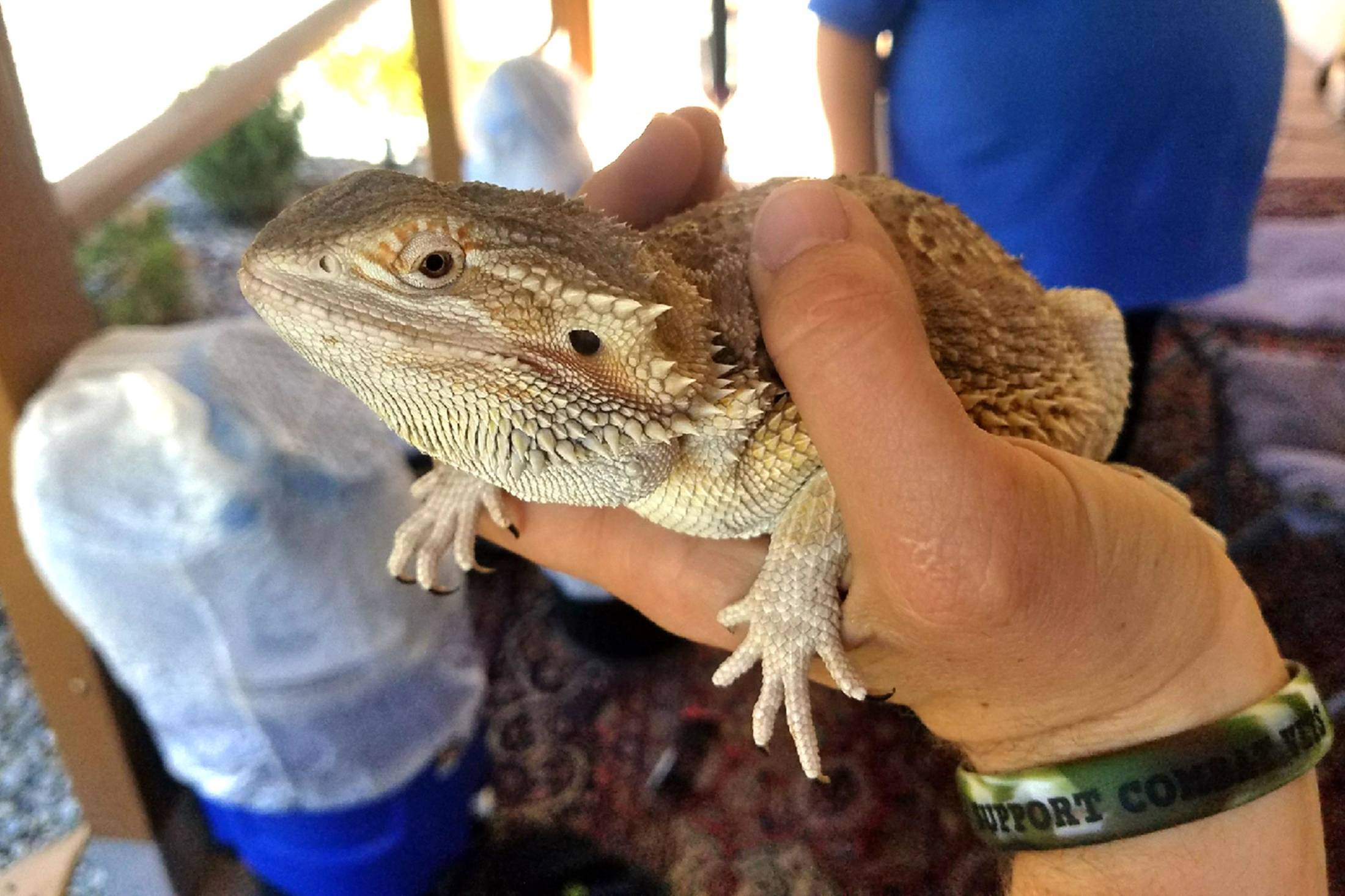 Bearded Dragon CR: Riverside County Department of Animal Services