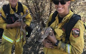 fighter rescue baby fawn wildfire