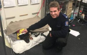 police dog stabbed and saved blood transfusion