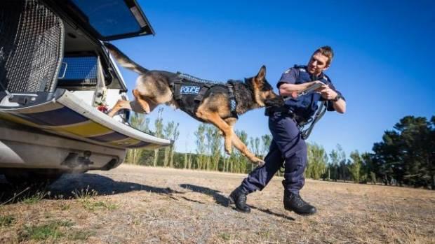 Police dog Kosmo