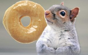 squirrel donut stolen police anchorage