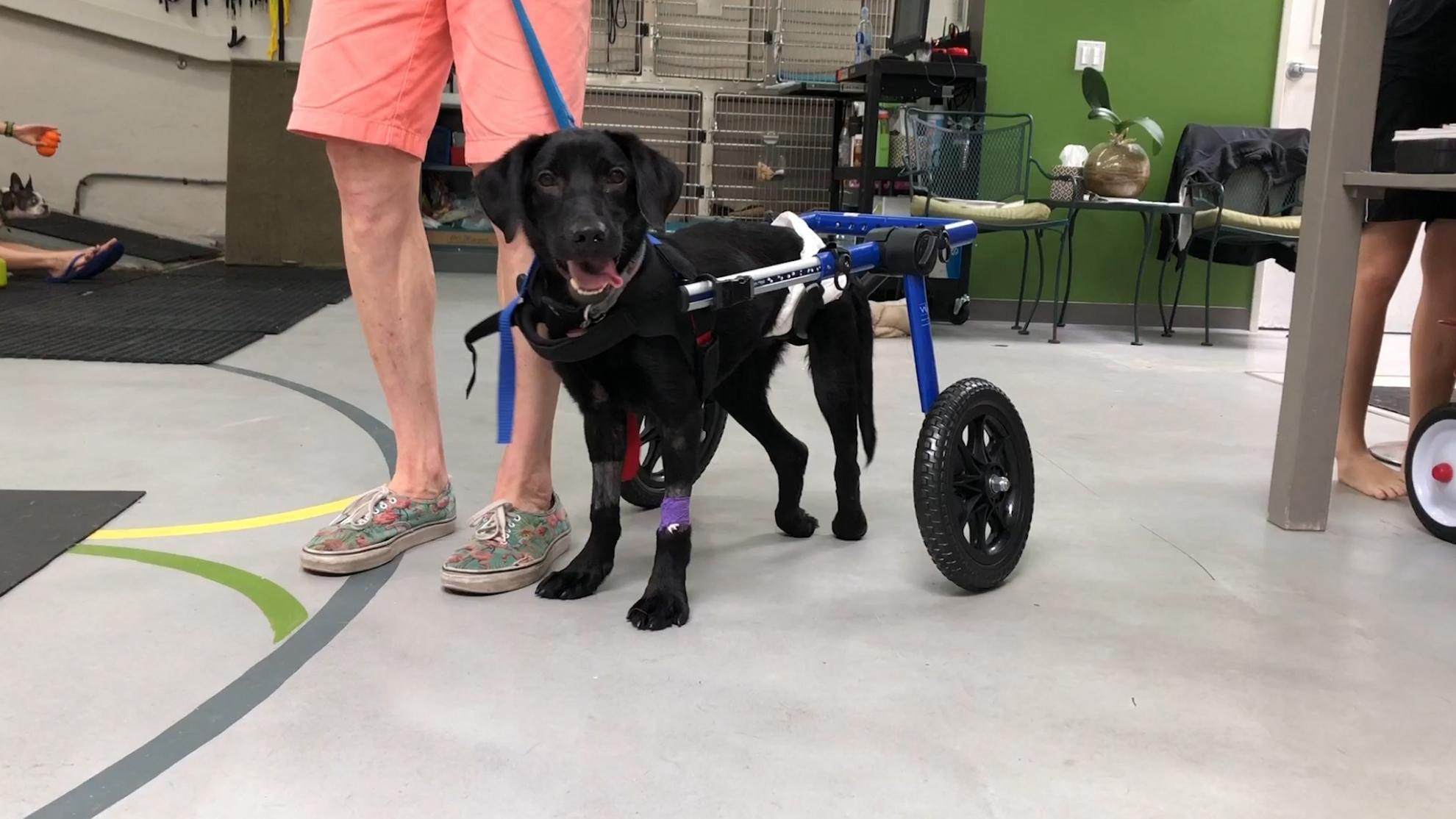 Bennie paralyzed