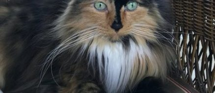 Michigan Town Elects Cat As Mayor